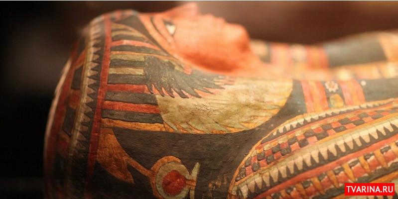 Археологи обнаружили необычную для женщины профессию в Древнем Египте