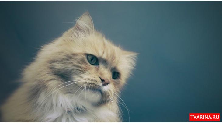Коты различают свои имена, но игнорируют хозяев, когда те зовут их - исследование