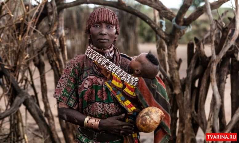 Хамеры африка