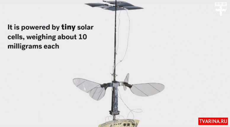 В США создали робо-пчелу, которая работает на солнечных батареях