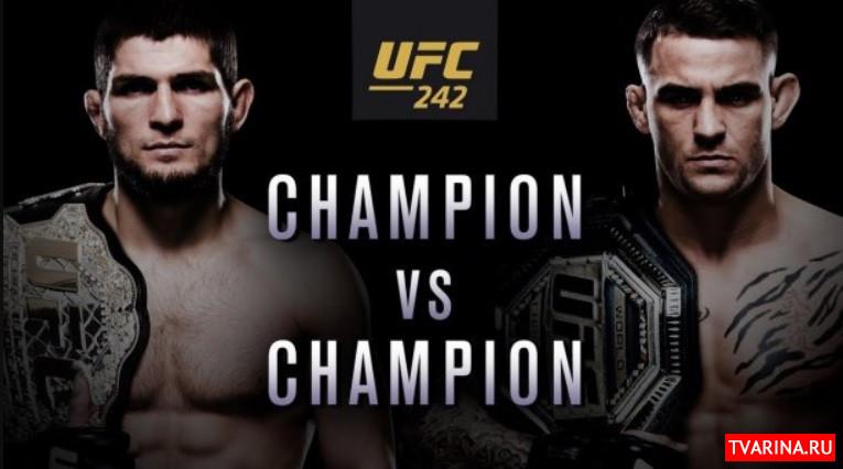 Хабиб Порье гонорар, сколько получат бойцы UFC 242?