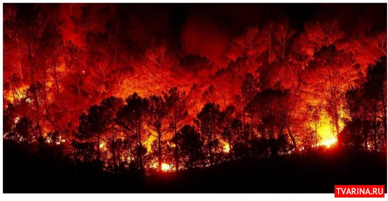 Пожары в Австралии 2020: как помочь?