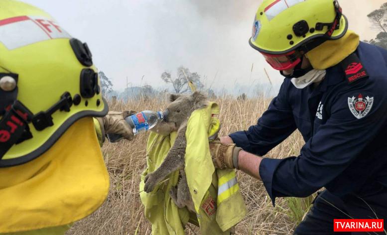 Все, что нужно знать о масштабных пожарах в Австралии 2020. Коротко