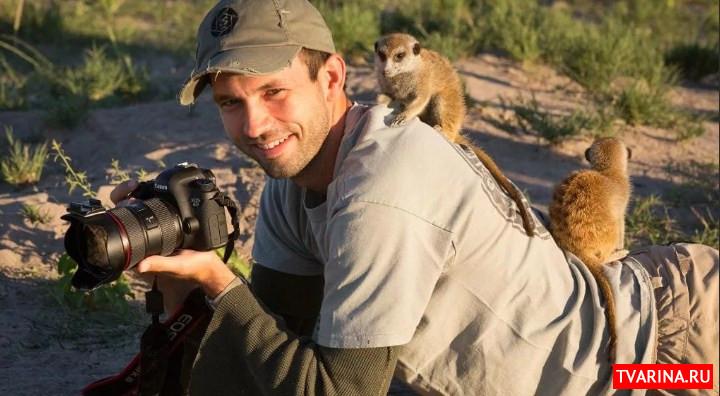 Зоопапараци: как и зачем следят за дикими животными