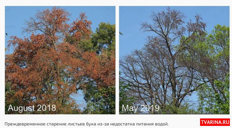 Европейские леса не способны адаптироваться к изменениям климата